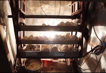 Kết quả hình ảnh cho máy ấp trứng
