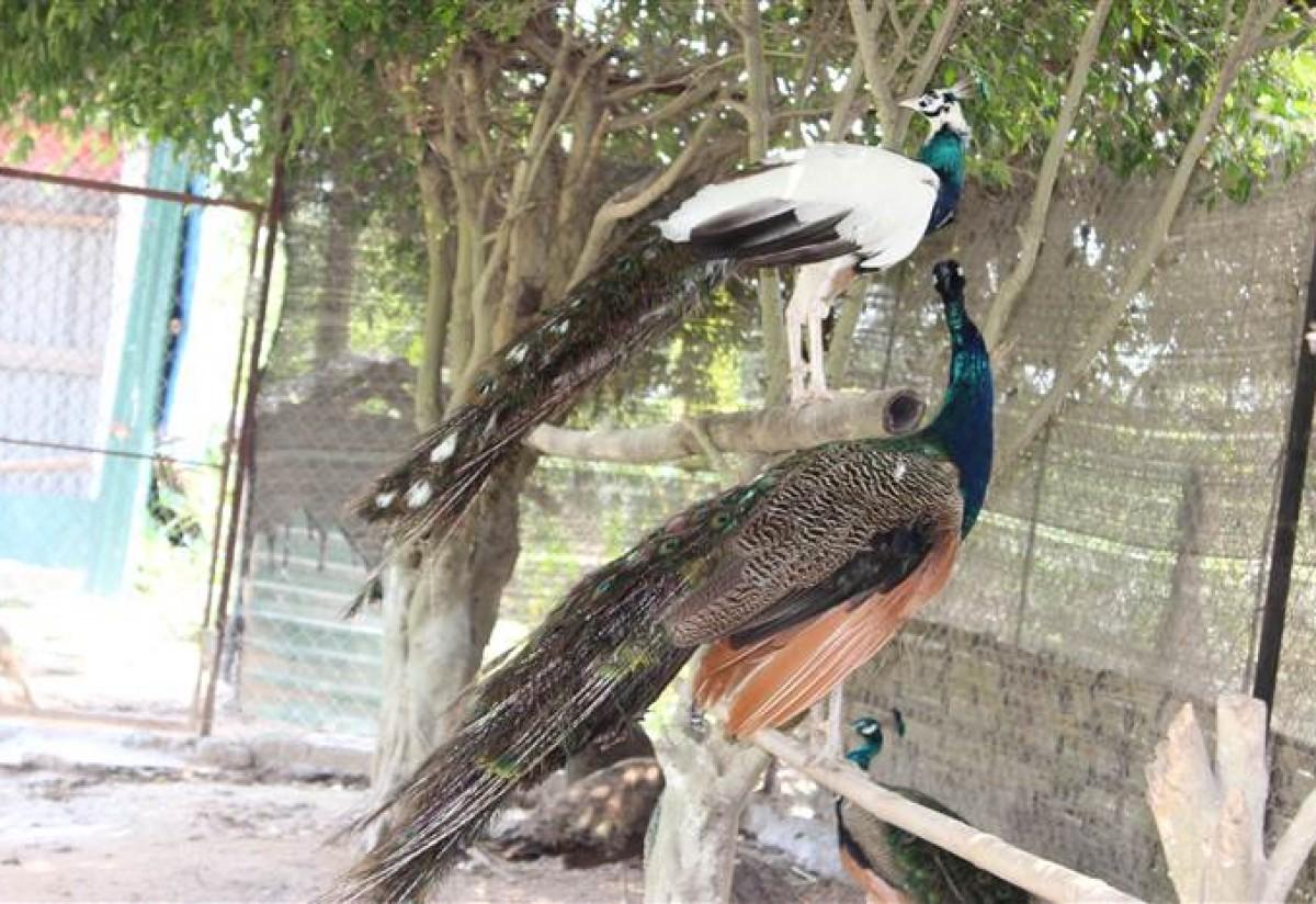 Các dự án đã triển khai của Vườn Chim Việt